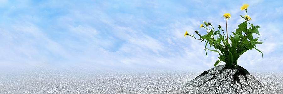 Motivational Image 010
